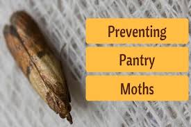 pantry moths extermination. Simple Pantry Pantry Moth Problems And Solutions In Moths Extermination A