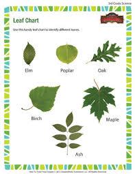Identification Chart For Leaves Leaf Chart 3rd Grade Kids Online Science Worksheets Sod