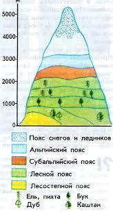 Высотная поясность Высотная поясность кавказа реферат