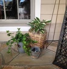 ivy loves the sun but it will grow just fine in the shade i usually purchase the tiniest plants available and plant two or more of them in my planters