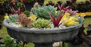 container gardening. Check Out These 4 Easy Steps To Creating A Beautiful Container Garden Gardening