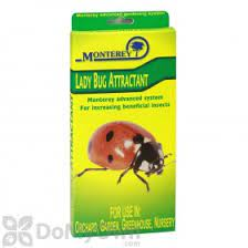 are ladybugs beneficial to pepper