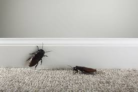Small Brown Bugs In Bedroom How To Control And Identify Clothes Eating Insects