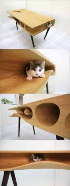 Cat lovers don't miss this! Shared Table Where People Can Work and Cats