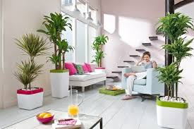 beautiful indoor plants to decorate