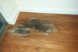 fixing hardwood floor damage