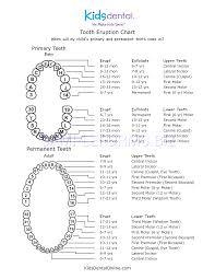 Preview Pdf Tooth Eruption Chart 1