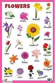 Flowers Name Chart Hindi And English Best Flower Site