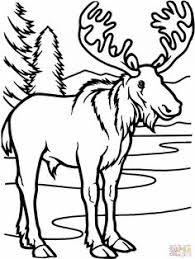 Small Picture forestanimalscoloringpages Moose Free Animal Coloring Pages