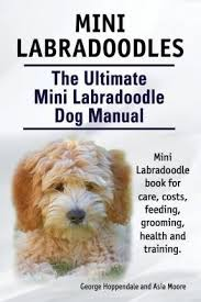 Small Picture Best 25 Miniature labradoodle ideas only on Pinterest