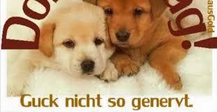 Lustige Sprüche Zum Donnerstag Kostenlos Downloaden Gb Pics