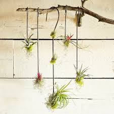 Driftwood for hanging garden