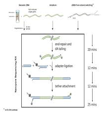 Nanopore Dna Sequencing For Metagenomic Soil Analysis Protocol