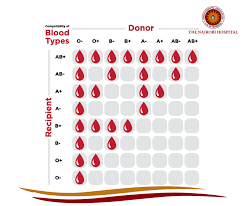 Who Can Donate Blood To Whom Chart
