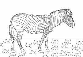 Zebras are members of the horse family. Free Printable Zebra Coloring Pages For Kids