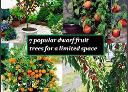 Cherry Trees For Sale  Nature Hills NurseryHybrid Fruit Trees For Sale