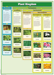 Plant Kingdom Classification Chart For Kids Montessori Materials Plant Kingdom Chart