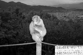 Iwatayama Monkey Park 京都市嵐山モンキーパークいわたやまの写真