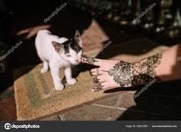 Ruka Henna Tetování Dotýká Kočka Stock Fotografie Juanjegarrido