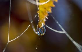 Картинки по запросу картинки вересневе павутиння