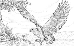 Bald Eagle Coloring Pages And Print For Adult