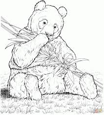 Download Coloring Pages: Panda Coloring Page Baby Panda Coloring ...