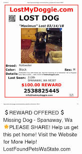 how to make lost dog flyers lost dog flyers template luxury how to make an effective missing pet