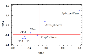 Bacteria And Protist Venn Diagram Gut Bacterial Community Of The Xylophagous Cockroaches Cryptocercus