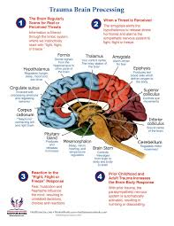 Brain Trauma Processing Chart How The Brain