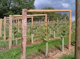 Grape Trellis Ideas Beautiful How to Build A Grape Arbor Unac Awesome  Collection Wire Trellis