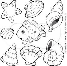 Small Picture 71 best Shells and Sea stuff images on Pinterest Coloring books