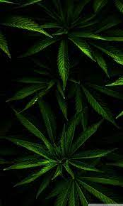 Weed Phone Wallpapers - Wallpaper Cave