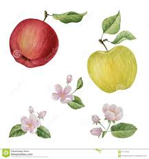 Apples To Apples Card Template Watercolor Apple Bloom Flowers Stock Illustration Illustration Of