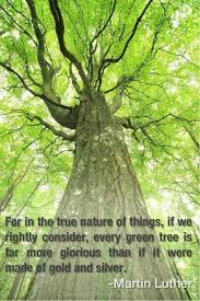 Tree Quotes Stunning Tree Quotes Yahoo Image Search Results Tree Quotes Pinterest