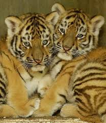 Image result for funny animals babies
