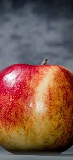 One red apple, gray background ...
