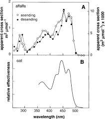 Action Spectrum Action Spectrum An Overview Sciencedirect Topics