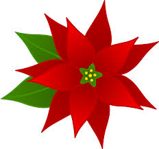 Free Poinsettia Pictures Download Free Clip Art Free Clip
