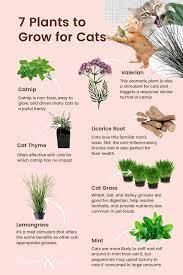 cat friendly plants cat