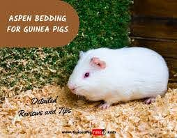 aspen bedding for guinea pigs detailed