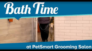 Petsmart Bather Puppy Bath Time At Petsmart Grooming Salon Youtube