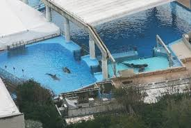 tilikum isolated. Fine Isolated Trainer Killed By Whale Likely Died From Drowning Trauma On Tilikum Isolated L