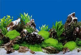 Aquarium Background Pictures Aquarium Fish Tank Backdrop And Background Paper Reptile Vivarium