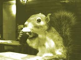 Image result for squirrels gif