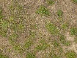 dirt grass texture seamless. Random Grass Texture 0037 - Texturelib · Dirt Seamless