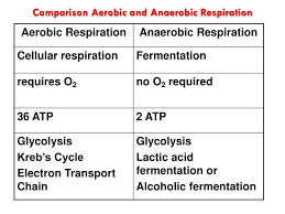 comparison aerobic and anaerobic respiration