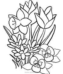 Bộ tranh tô màu hoa quả với nhiều loại hoa và trái cây nhất ✔️Cẩm Nang  Tiếng Anh ✔️