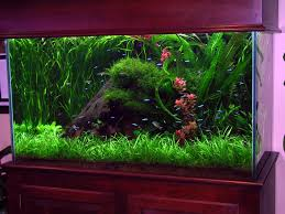 Interior Designs Ideas Corner Fish Tanks Aquariums Acrylic Tank Design  Filter Gravel Custom Large Start Background