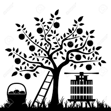 apple tree clipart black and white. vector apple tree, basket of apples and fruit press isolated on white background stock tree clipart black