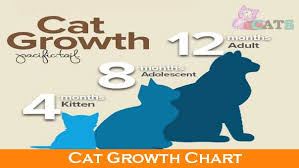 Kitten Growth Chart Weight Cat Growth Chart And The Growth Of Cats